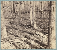 Skull and bones of unburied soldiers along Orange Plank road after the battle of the wilderness, photographed by G. O. Brown, circa 1864