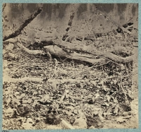 Skull and bones of unburied soldiers along Orange Plank road after the battle of the wilderness, photographed by G. O. Brown, circa 1864-1865