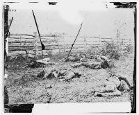 Confederate soldiers as they fell inside the fence on the Hagerstown Road at the battle of Antietam, photographed by Alexander Gardner, circa Sept 1862