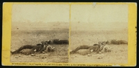 Confederate soldiers as they fell, near the Burnside Bridge, at the battle of Antietam, photographed by Alexander Gardner, circa 1862