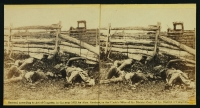 Group of soldiers from the Louisiana regiment as they fell at the battle of Antietam, photographed by Alexander Gardner, circa Sept 1862